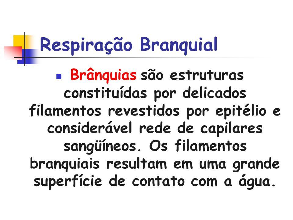 Respiração Branquial Brânquias são estruturas constituídas por delicados filamentos revestidos por epitélio e considerável rede de capilares sangüíneo