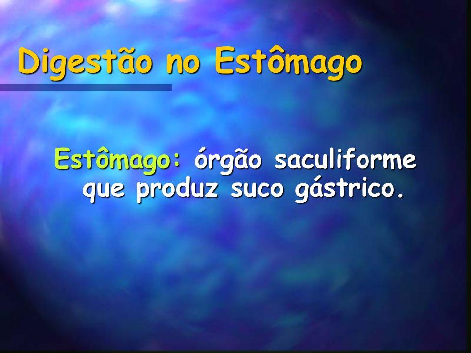 Digestão no Estômago Estômago: órgão saculiforme que produz suco gástrico.