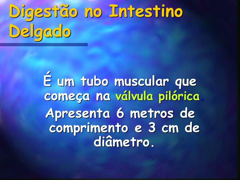 Digestão no Intestino Delgado É um tubo muscular que começa na válvula pilórica. Apresenta 6 metros de comprimento e 3 cm de diâmetro.
