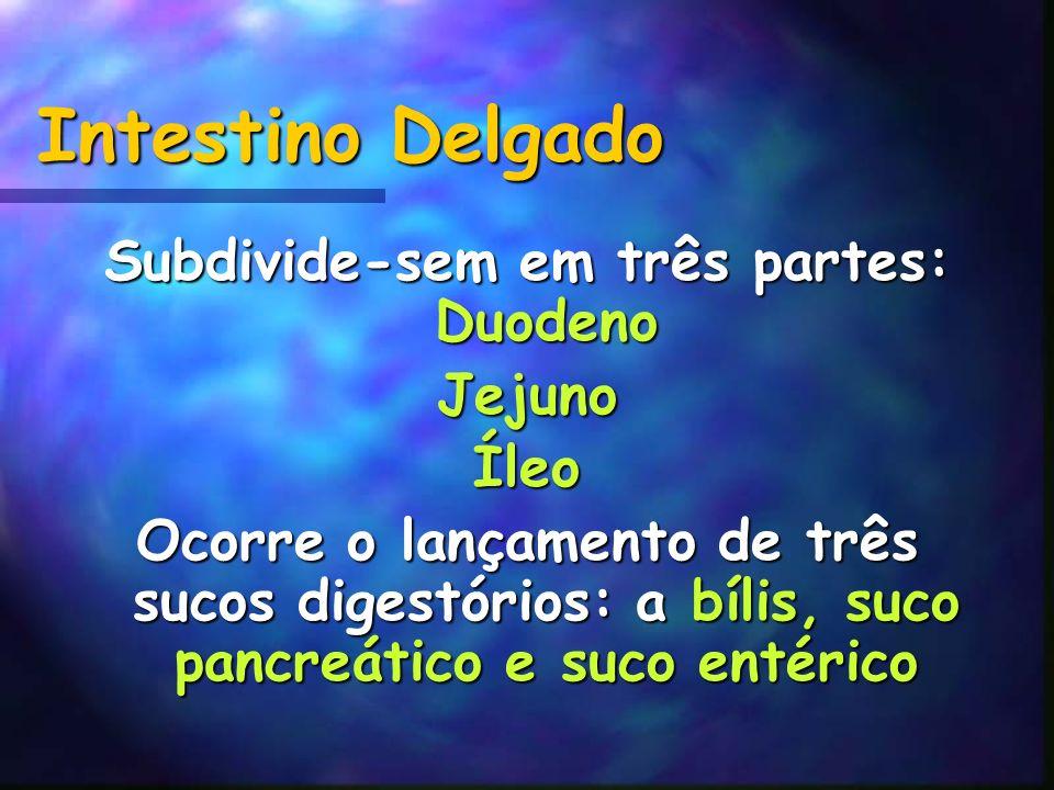 Intestino Delgado Subdivide-sem em três partes: Duodeno JejunoÍleo Ocorre o lançamento de três sucos digestórios: a bílis, suco pancreático e suco ent