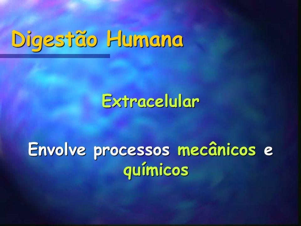 Digestão Humana Extracelular Envolve processos mecânicos e químicos