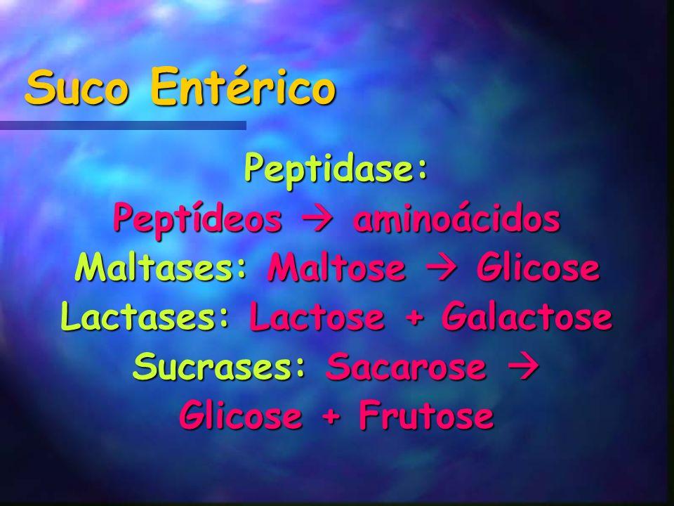 Suco Entérico Peptidase: Peptídeos aminoácidos Maltases: Maltose Glicose Lactases: Lactose + Galactose Sucrases: Sacarose Sucrases: Sacarose Glicose +