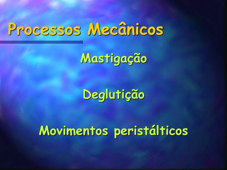 Processos Mecânicos MastigaçãoDeglutição Movimentos peristálticos