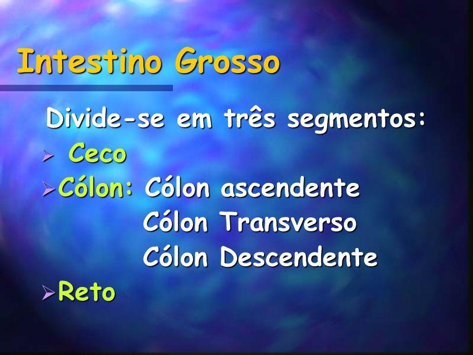 Intestino Grosso Divide-se em três segmentos: Ceco Ceco Cólon: Cólon ascendente Cólon: Cólon ascendente Cólon Transverso Cólon Transverso Cólon Descen