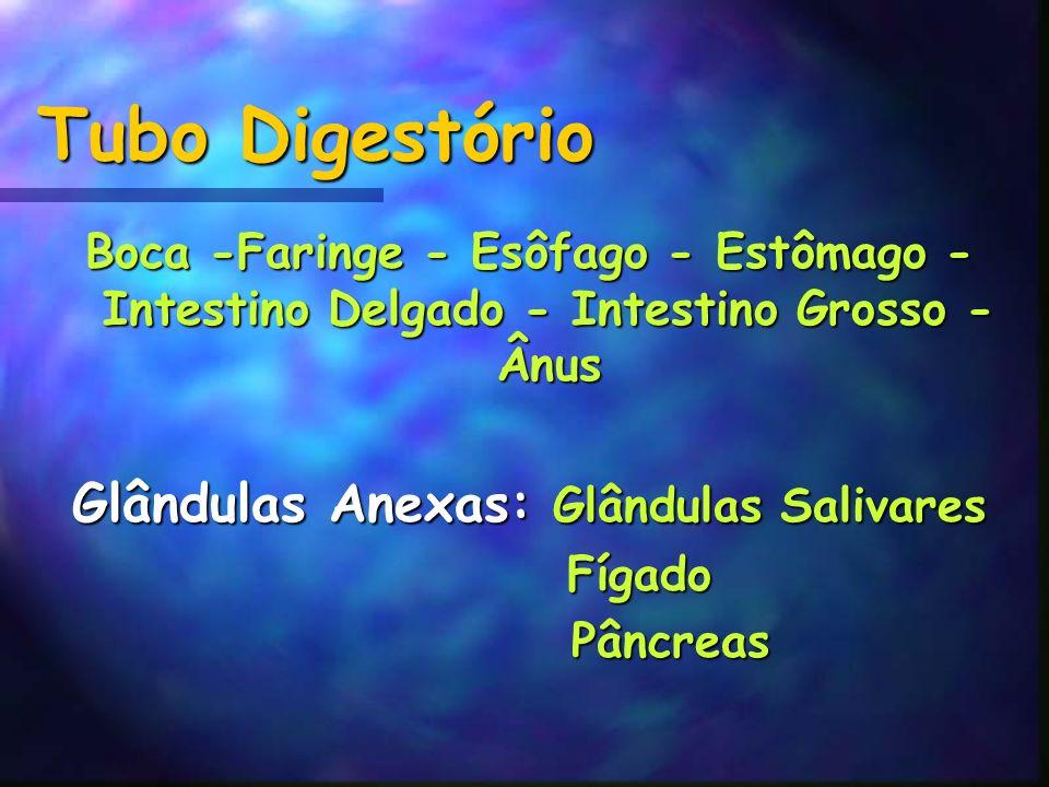 Tubo Digestório Boca -Faringe - Esôfago - Estômago - Intestino Delgado - Intestino Grosso - Ânus Glândulas Anexas: Glândulas Salivares Fígado Fígado P