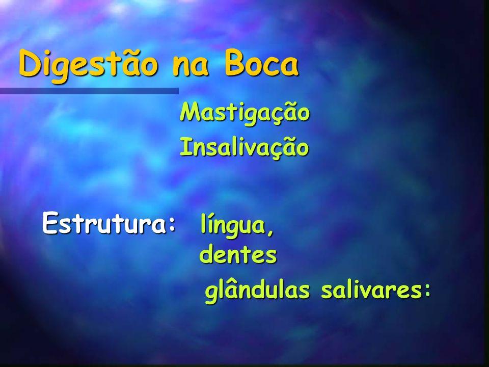Digestão na Boca MastigaçãoInsalivação Estrutura: língua, dentes glândulas salivares: glândulas salivares: