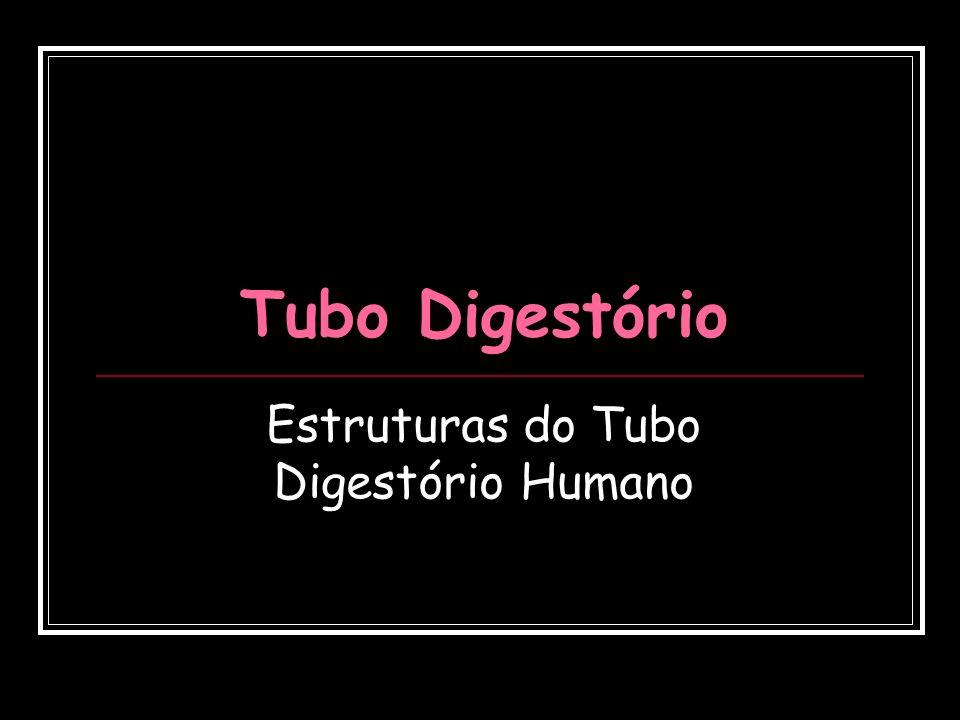 Tubo Digestório Estruturas do Tubo Digestório Humano