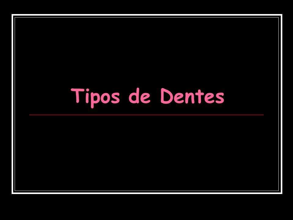 Tipos de Dentes