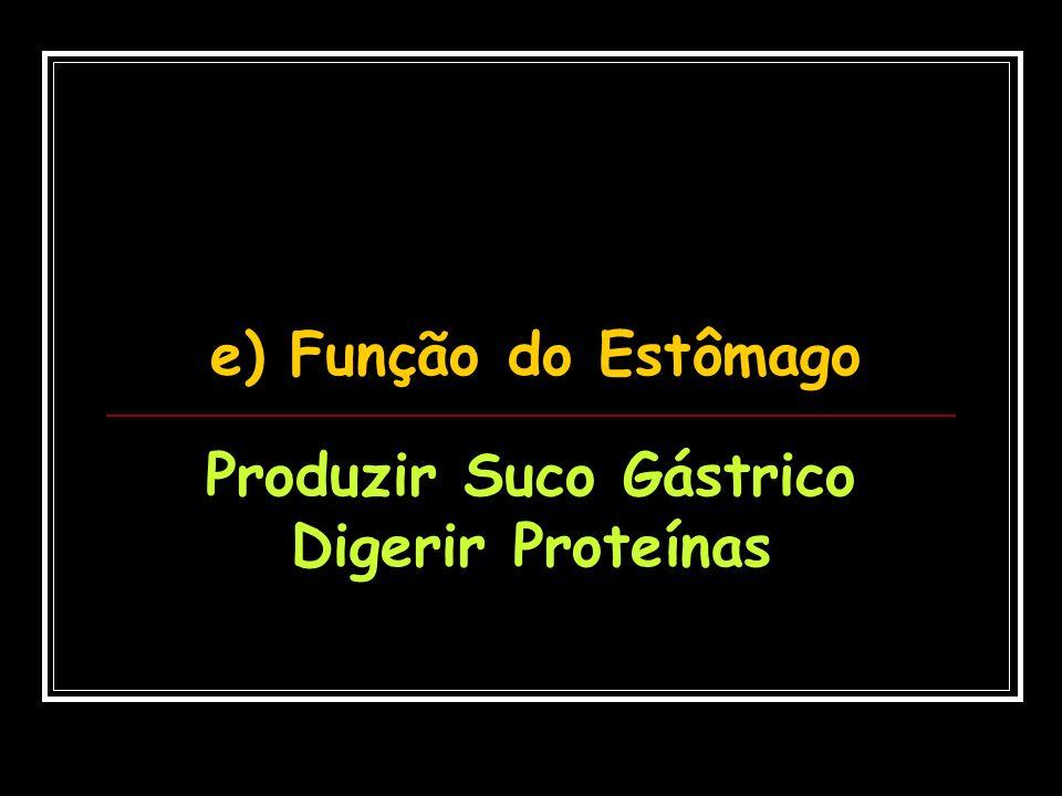 e) Função do Estômago Produzir Suco Gástrico Digerir Proteínas