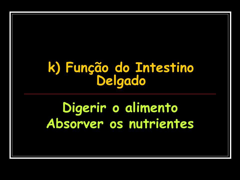 k) Função do Intestino Delgado Digerir o alimento Absorver os nutrientes