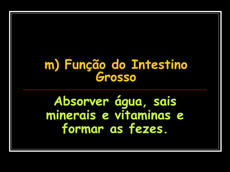 m) Função do Intestino Grosso Absorver água, sais minerais e vitaminas e formar as fezes.