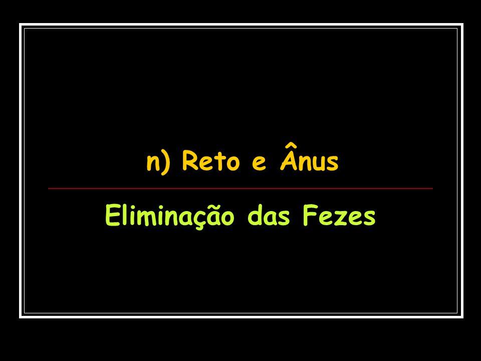 n) Reto e Ânus Eliminação das Fezes