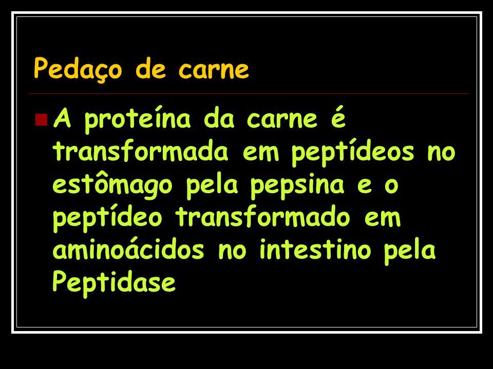 Pedaço de carne A proteína da carne é transformada em peptídeos no estômago pela pepsina e o peptídeo transformado em aminoácidos no intestino pela Pe