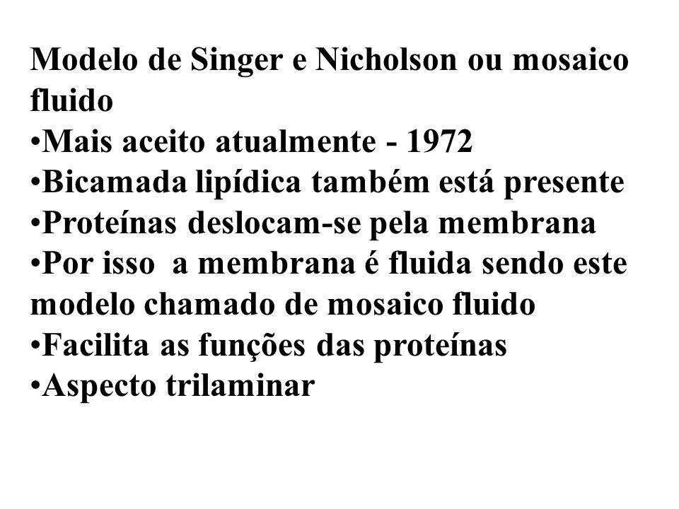Modelo de Singer e Nicholson ou mosaico fluido Mais aceito atualmente - 1972 Bicamada lipídica também está presente Proteínas deslocam-se pela membrana Por isso a membrana é fluida sendo este modelo chamado de mosaico fluido Facilita as funções das proteínas Aspecto trilaminar