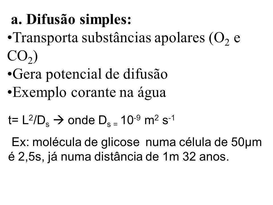 a. Difusão simples: Transporta substâncias apolares (O 2 e CO 2 ) Gera potencial de difusão Exemplo corante na água t= L 2 /D s onde D s = 10 -9 m 2 s