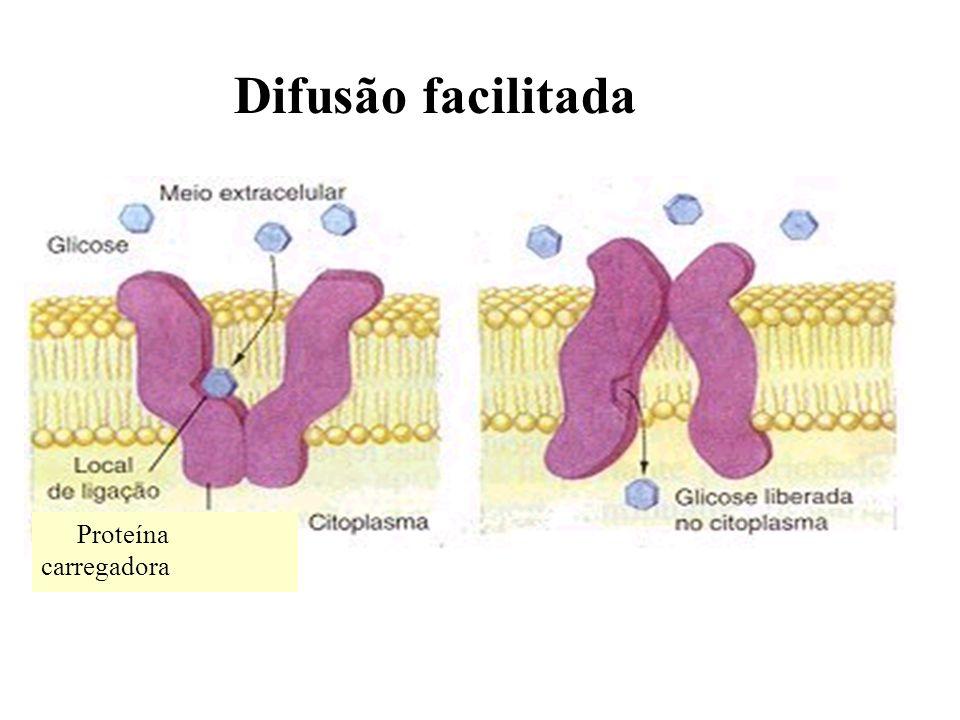 Proteína carregadora Difusão facilitada