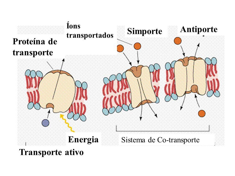 Proteína de transporte Íons transportados Simporte Antiporte Sistema de Co-transporte Energia Transporte ativo