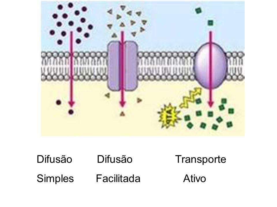 Difusão DifusãoTransporte Simples Facilitada Ativo