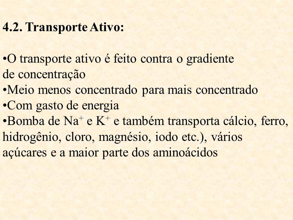 4.2. Transporte Ativo: O transporte ativo é feito contra o gradiente de concentração Meio menos concentrado para mais concentrado Com gasto de energia