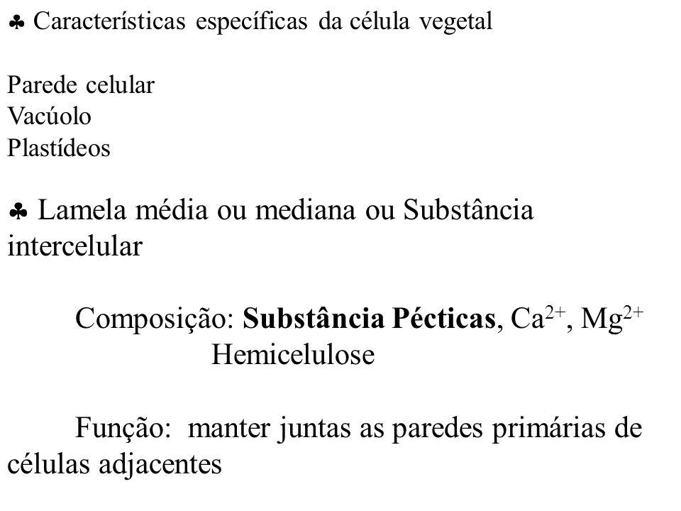 Características específicas da célula vegetal Parede celular Vacúolo Plastídeos Lamela média ou mediana ou Substância intercelular Composição: Substância Pécticas, Ca 2+, Mg 2+ Hemicelulose Função: manter juntas as paredes primárias de células adjacentes