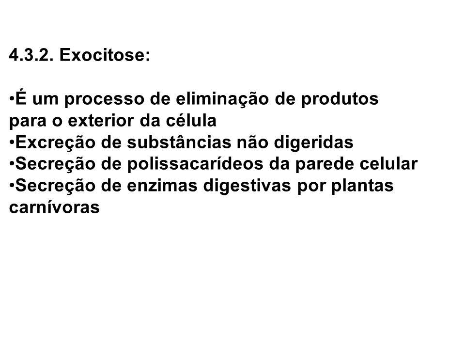 4.3.2. Exocitose: É um processo de eliminação de produtos para o exterior da célula Excreção de substâncias não digeridas Secreção de polissacarídeos