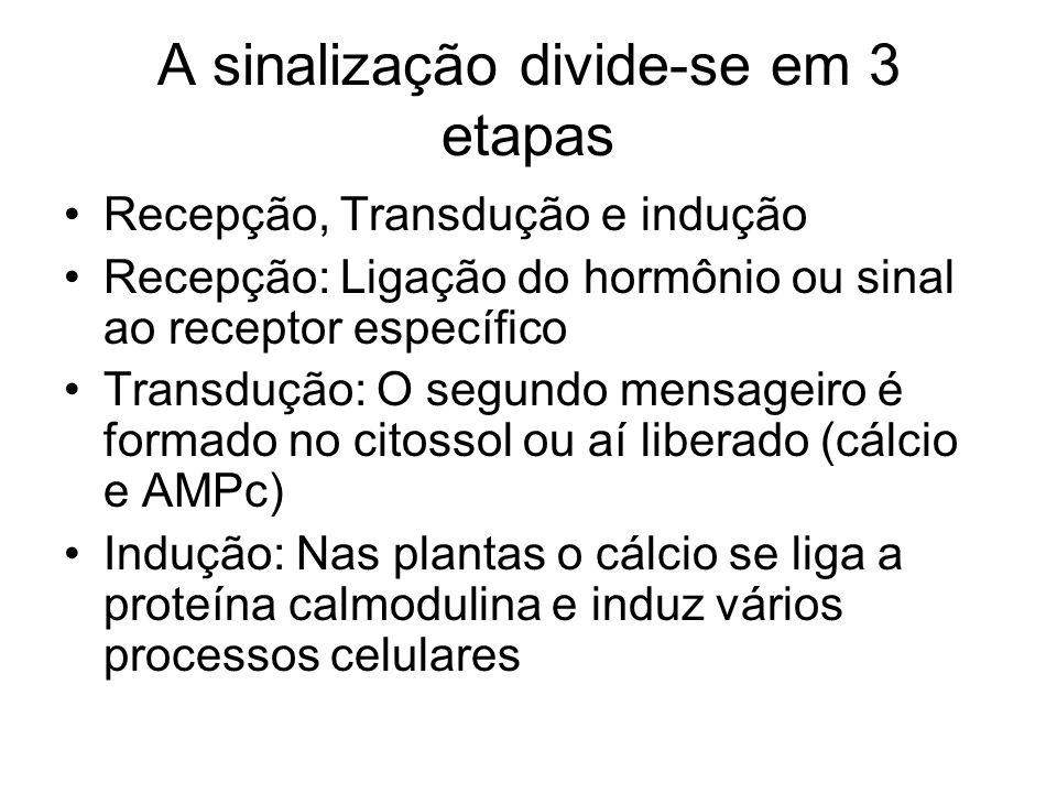 A sinalização divide-se em 3 etapas Recepção, Transdução e indução Recepção: Ligação do hormônio ou sinal ao receptor específico Transdução: O segundo