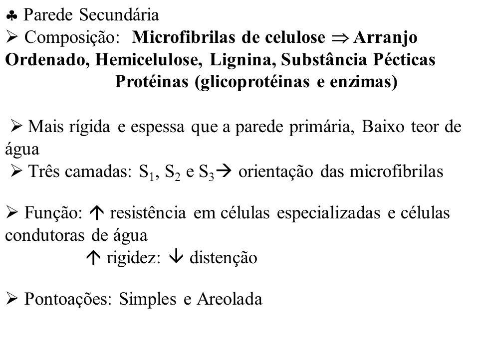 Parede Secundária Composição: Microfibrilas de celulose Arranjo Ordenado, Hemicelulose, Lignina, Substância Pécticas Protéinas (glicoprotéinas e enzim