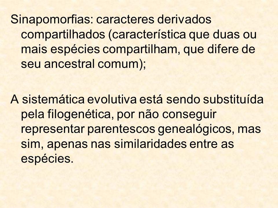 Sinapomorfias: caracteres derivados compartilhados (característica que duas ou mais espécies compartilham, que difere de seu ancestral comum); A siste