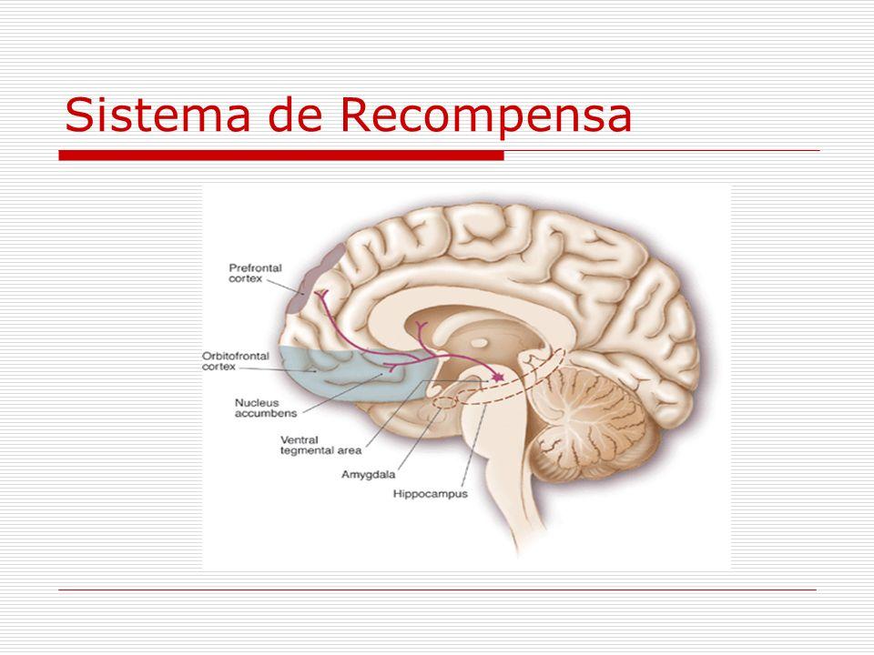 Psicofarmacologia da Recompensa Neurotransmissor do prazer: dopamina; Centro do prazer: sistema dopaminérgico mesolímbico; A maioria das drogas liberam dopamina no sistema mesolímbico; O risco de dependência pode estar associado à quantidade de receptores D2.