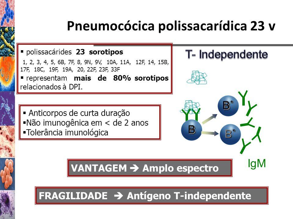 Pneumocócica polissacarídica 23 v polissacárides 23 sorotipos 1, 2, 3, 4, 5, 6B, 7F, 8, 9N, 9V, 10A, 11A, 12F, 14, 15B, 17F, 18C, 19F, 19A, 20, 22F, 2