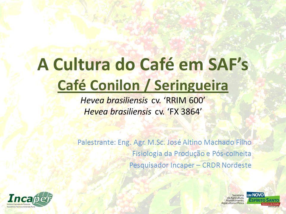 A Cultura do Café em SAFs Café Conilon / Seringueira Hevea brasiliensis cv. RRIM 600 Hevea brasiliensis cv. FX 3864 Palestrante: Eng. Agr. M.Sc. José