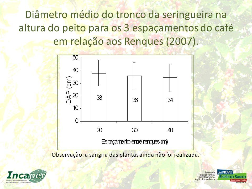 Diâmetro médio do tronco da seringueira na altura do peito para os 3 espaçamentos do café em relação aos Renques (2007). Observação: a sangria das pla