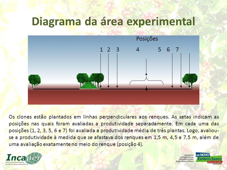 Diagrama da área experimental Posições 1 2 3 4 5 6 7 Os clones estão plantados em linhas perpendiculares aos renques. As setas indicam as posições nas