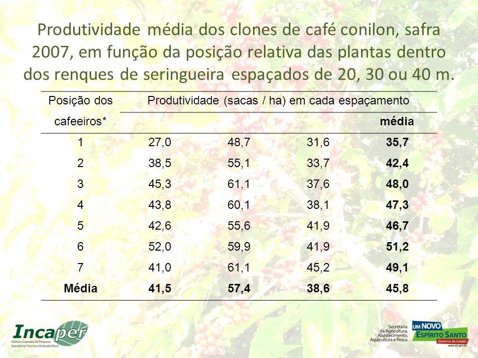Produtividade média dos clones de café conilon, safra 2007, em função da posição relativa das plantas dentro dos renques de seringueira espaçados de 2