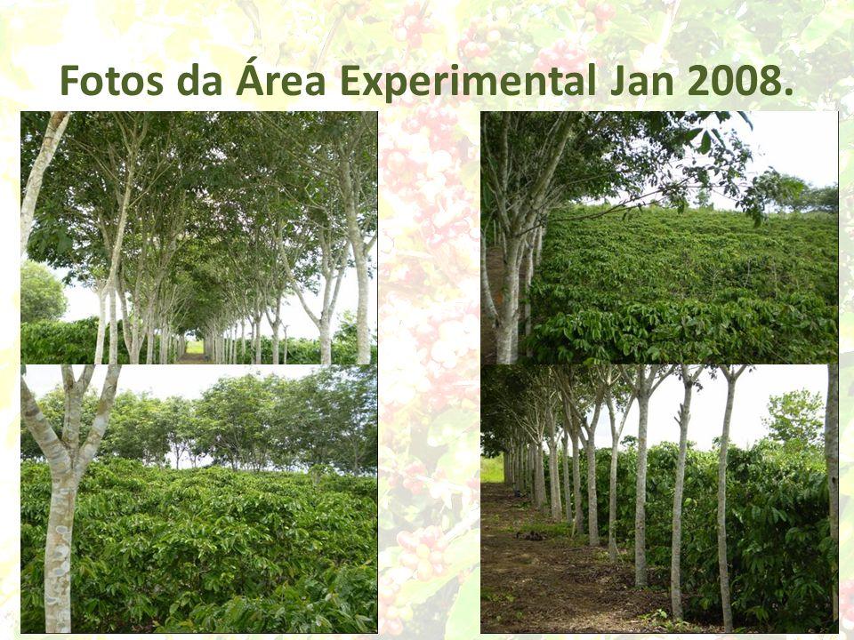 Fotos da Área Experimental Jan 2008.