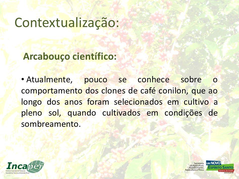 Experimento Café com Seringueira (1999 – 2007) Fazenda Experimental de Sooretama – Incaper Convênio Embrapa Café - Incaper Identificação de níveis de sombreamento que viabilizem técnica e economicamente as culturas associadas.