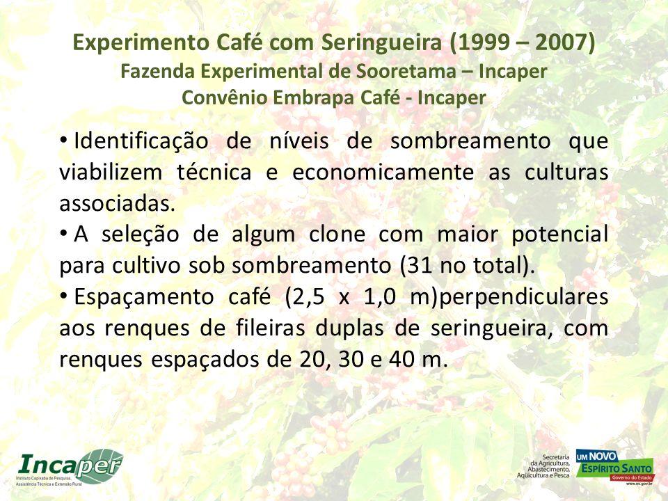 Experimento Café com Seringueira (1999 – 2007) Fazenda Experimental de Sooretama - Incaper Observações: Alguns clones apresentaram altas produtividades quando cultivados em consórcio; outros não.