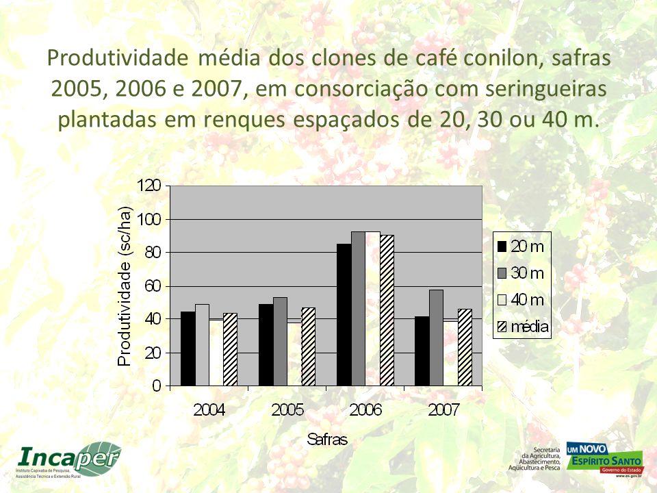 Produtividade média dos clones de café conilon, safras 2005, 2006 e 2007, em consorciação com seringueiras plantadas em renques espaçados de 20, 30 ou