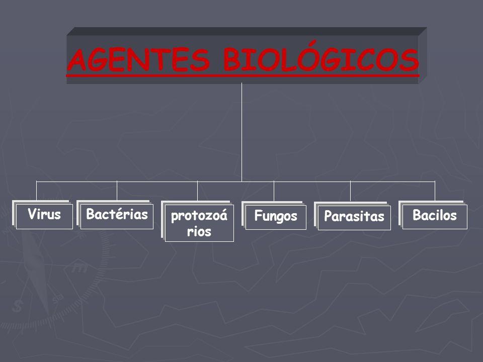 AGENTES BIOLÓGICOS VirusBactérias protozoá rios Fungos Parasitas Bacilos