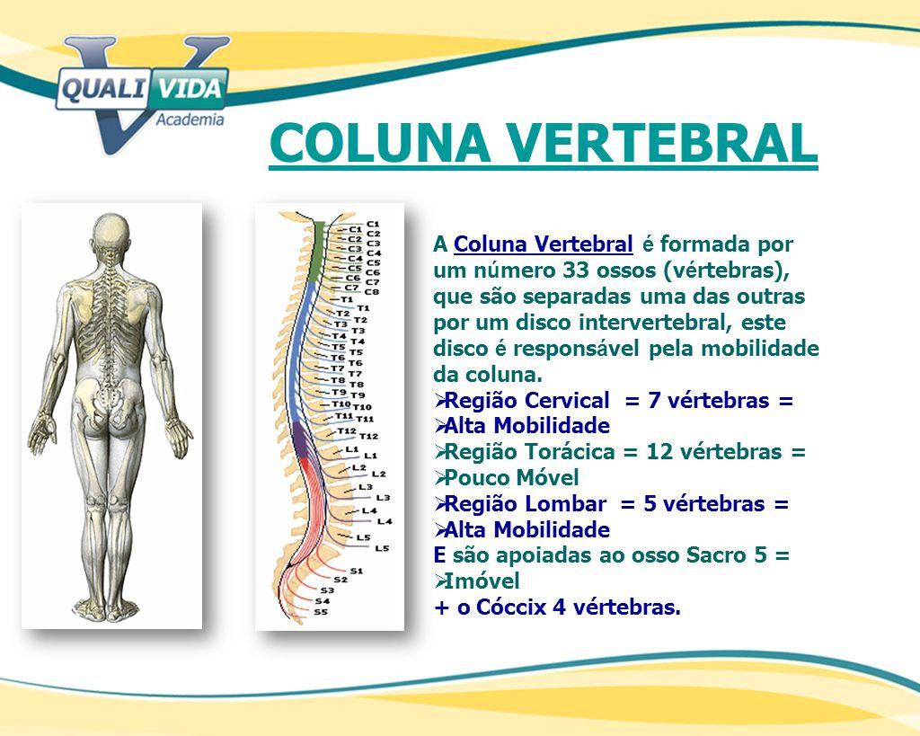 A Coluna Vertebral é formada por um n ú mero 33 ossos (v é rtebras), que são separadas uma das outras por um disco intervertebral, este disco é respon
