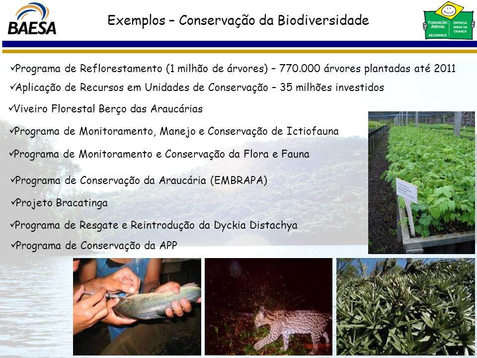 Projeto Bracatinga Exemplos – Conservação da Biodiversidade Programa de Reflorestamento (1 milhão de árvores) – 770.000 árvores plantadas até 2011 Pro