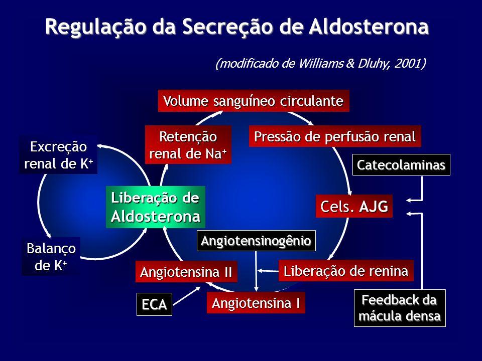 Regulação da Secreção de Aldosterona Balanço de K + ECA Pressão de perfusão renal Excreção renal de K + Volume sanguíneo circulante Cels.