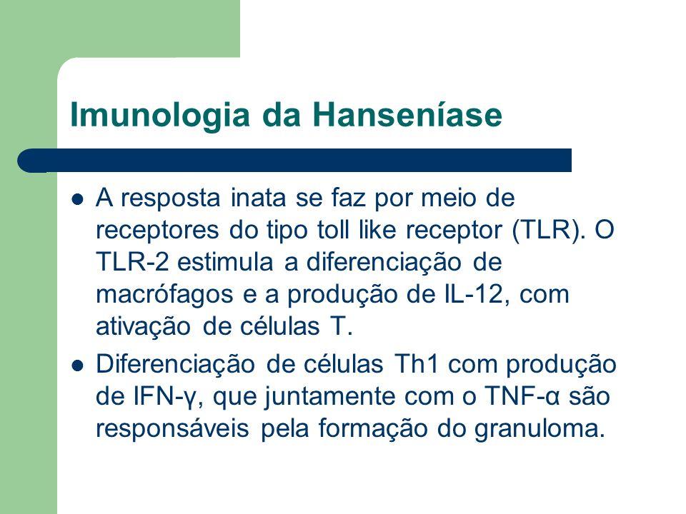 Imunologia da Hanseníase A resposta inata se faz por meio de receptores do tipo toll like receptor (TLR). O TLR-2 estimula a diferenciação de macrófag