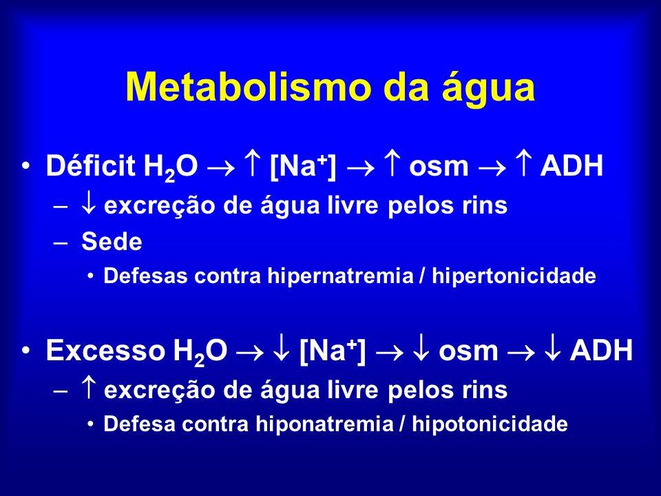 Metabolismo da água Déficit H 2 O [Na + ] osm ADH – excreção de água livre pelos rins – Sede Defesas contra hipernatremia / hipertonicidade Excesso H