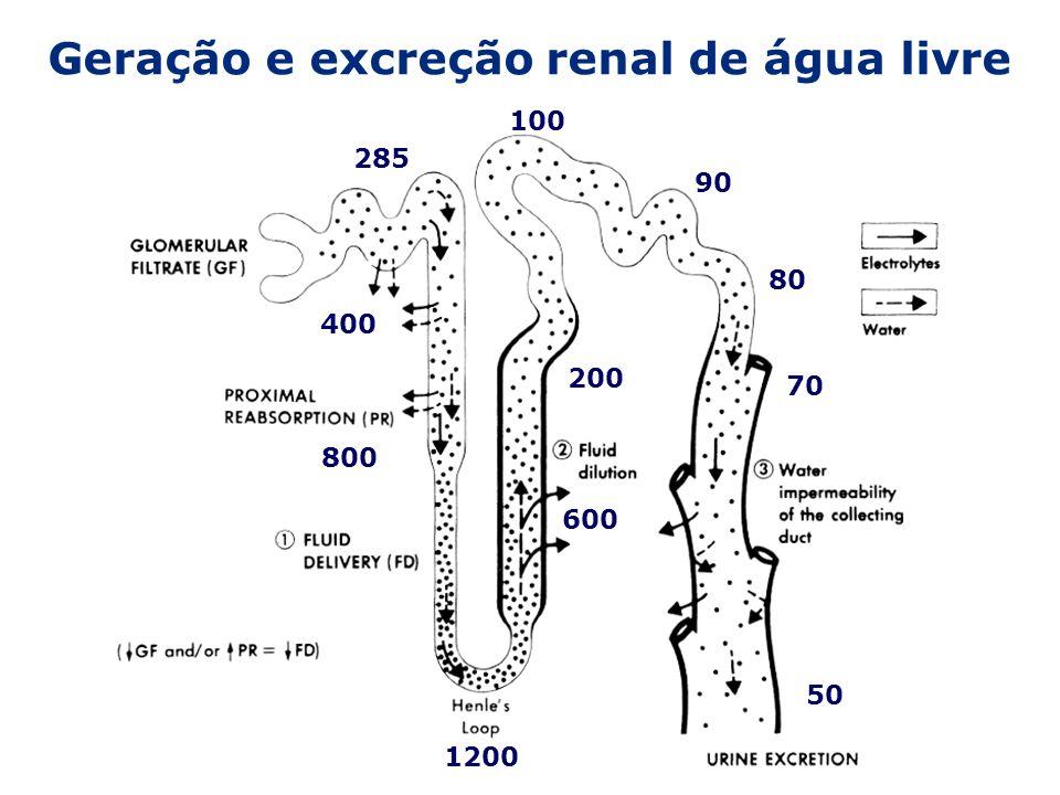 Geração e excreção renal de água livre 285 400 800 1200 600 200 100 90 80 70 50