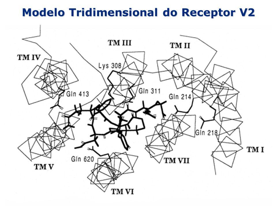 Modelo Tridimensional do Receptor V2