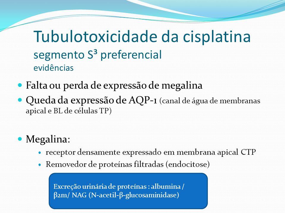 DHE Magnésio níveis séricos 1,5 – 1,9 mEq/l (normal) <1,5 mEq/l / <1,8mg/dl (deficiência leve) <1,0 mEq/l / <1,2 mg/dl (grave) 1mmol/l = 2mEq/l = 2,4mg/dl