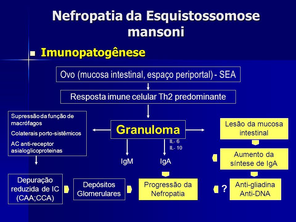 Nefropatia da Esquistossomose mansoni Imunopatogênese Imunopatogênese Ovo (mucosa intestinal, espaço periportal) - SEA Granuloma Supressão da função d