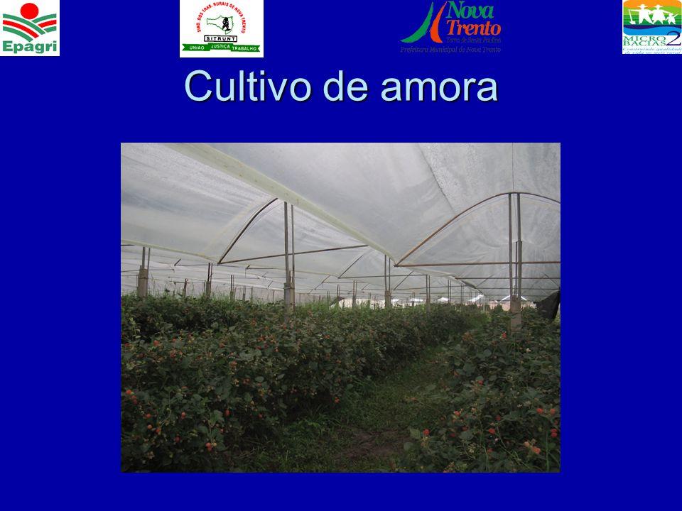 Cultivo de uva