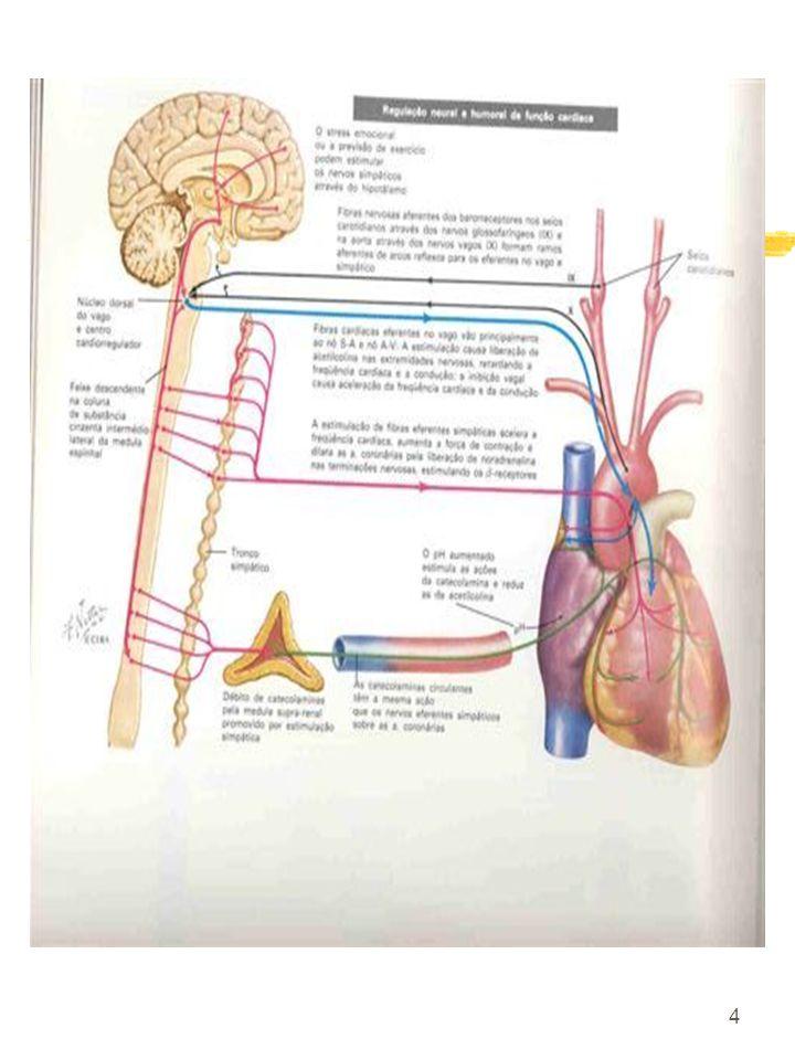 5 4 Ecocardio: - volume diastólico e sistólicos finais (manutenção da fração de ejeção) Fleg J.L; O´Connor F e cols; 1995.